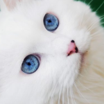 Profile picture of flufwig