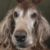 Profile picture of joseybear